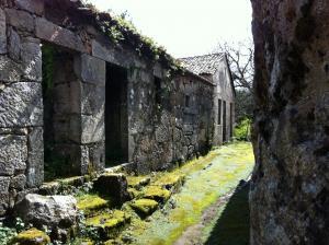 mossy wonderland