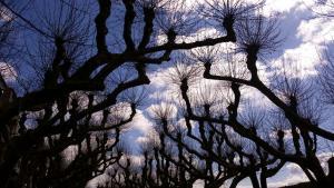 clouds-trees-padron-caminho