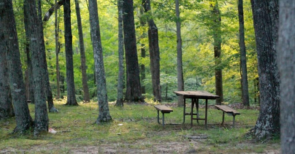 campsite-picnic